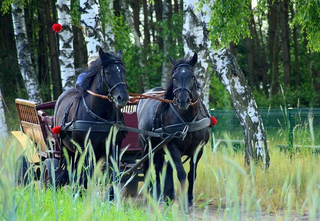 koně s povozem.jpg