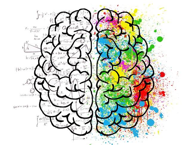 poloviny mozku